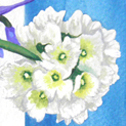 Close up detail of Ranunculus and Bluebells: original